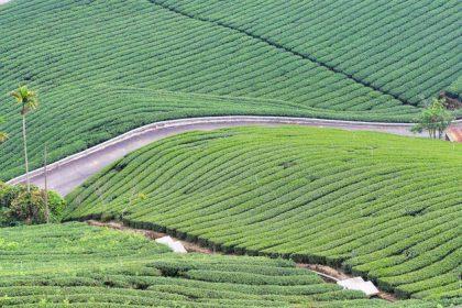 mooie theelanden plantages